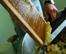 Un agropole de production du miel annoncé dans la région du Nord-Ouest du Cameroun en 2016